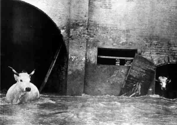 Polesine, alluvione del 1951